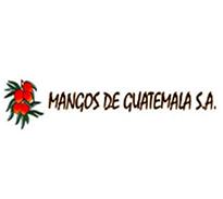mangos de guatemala
